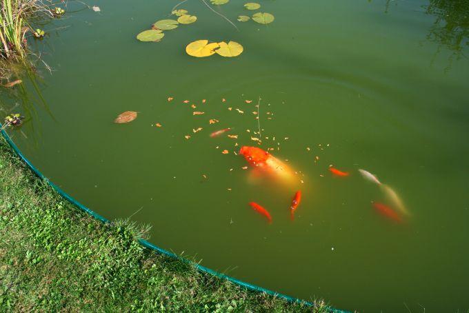 Poisson rouge vendre for Bocal poisson acheter