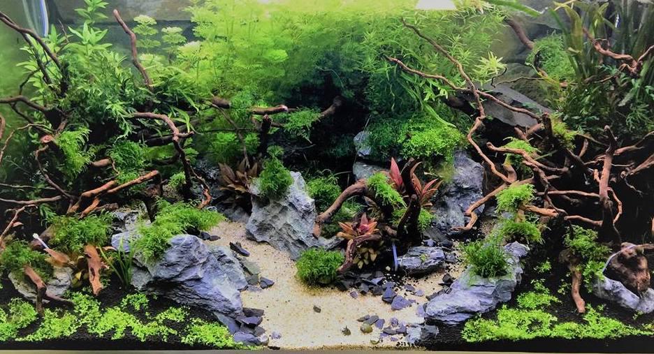 Bois Pour Aquarium Eau Douce